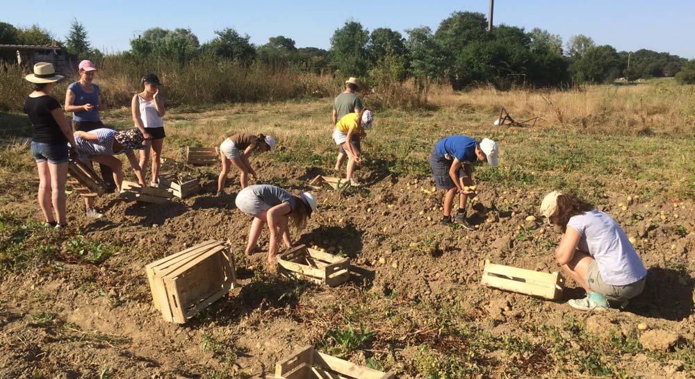 Tout le monde s'active pour le ramassage des pommes de terre !