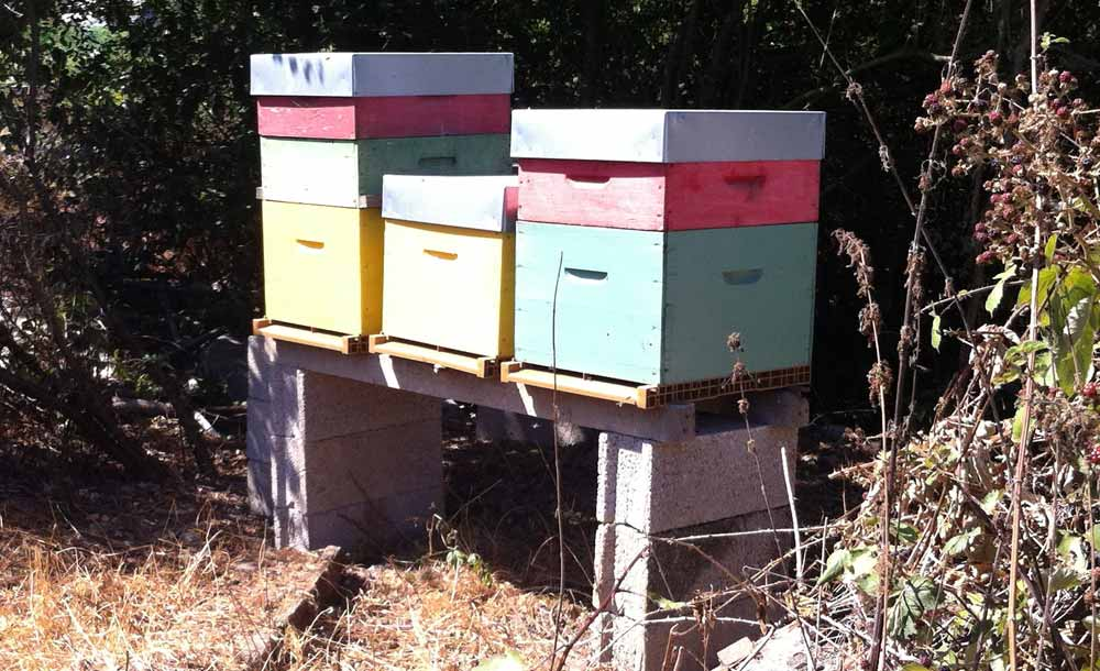 Les ruches…